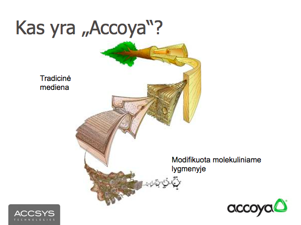 kasyraaccoya-2